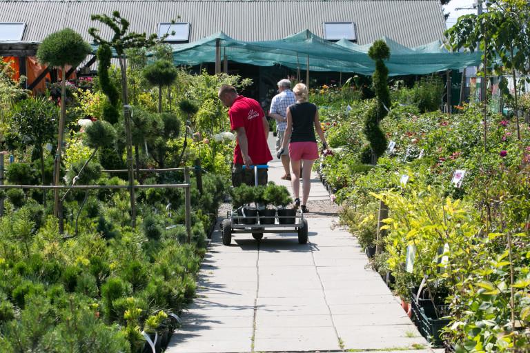Wybór roślin ogrodowych