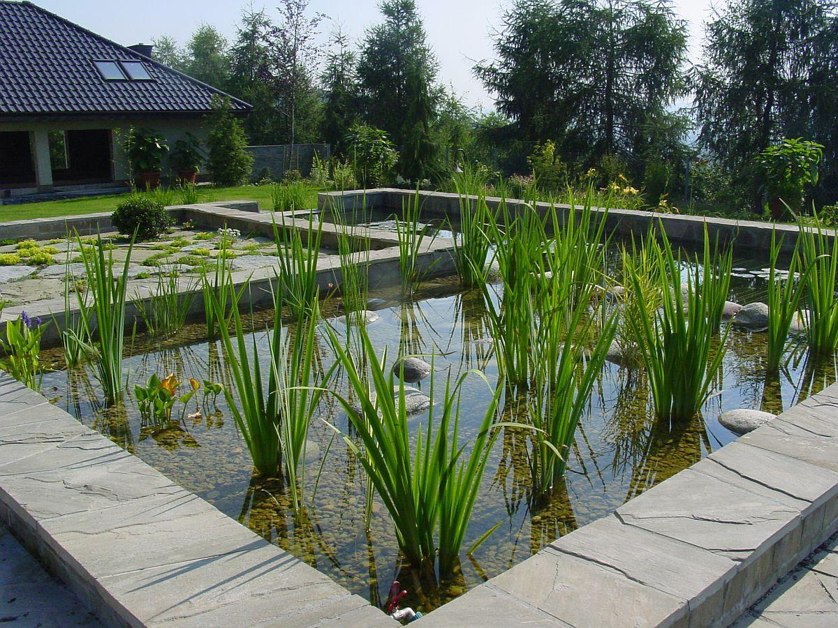 rośliny w zbiornikach wodnych